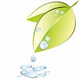 Grönt blad med vattendroppe på vitt bakgrundsvatten på vit Arkivfoton