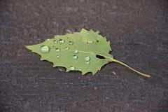 Grönt blad med vattensmå droppar på ett texturerat däck Fotografering för Bildbyråer