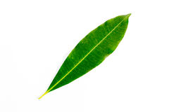 Grönt blad med vit bakgrund Royaltyfri Foto