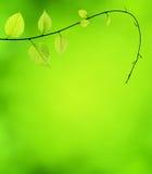 Grönt blad och bakgrund Royaltyfri Foto