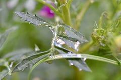 Grönt blad och färgrikt vatten arkivfoto