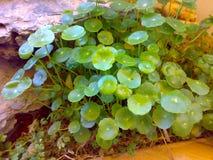 Grönt blad och härlig sten Arkivfoton
