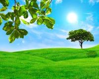Grönt blad och träd i gräsfält med blå himmel Royaltyfri Bild