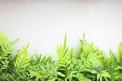 Grönt blad på den vita väggen Arkivfoton