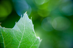 Grönt blad på grön bakgrund Arkivfoton
