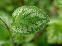 Grönt blad på grön bokeh royaltyfri fotografi