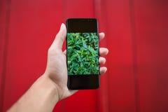 Grönt blad på smartphoneskärm och gulingbakgrund Arkivbild