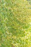 Grönt blad på träd i trädgård arkivbild