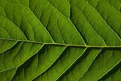 Grönt blad som bakgrund Arkivfoton