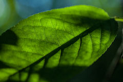 Grönt blad som bakgrund Arkivfoto