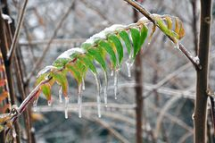 Grönt blad under isen och snön Royaltyfri Fotografi