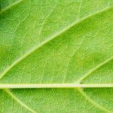 Grönt bladtexturslut upp bakgrund Fotografering för Bildbyråer