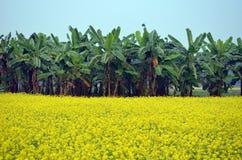 Grönt blomma- och bananträd Royaltyfria Foton