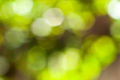 Grönt bokehabstrakt begrepp Royaltyfri Bild