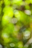 Grönt bokehabstrakt begrepp Arkivfoton