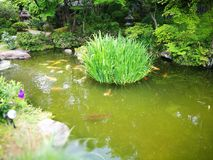 grönt damm arkivbilder