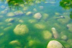 grönt damm för alger Arkivfoton