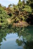 grönt dammvatten har en härlig reflexion royaltyfri bild
