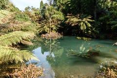 grönt dammvatten har en härlig reflexion arkivfoton