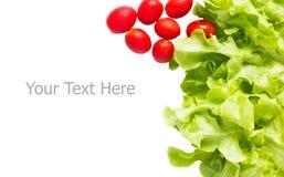 Grönt ekblad och Cherry Tomatoes Arkivbilder