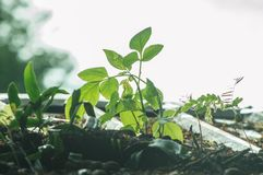 Grönt ekologiskt begrepp, växt som växer på detaluminium täckte ståltaket royaltyfri bild