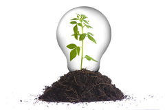 Grönt energibegrepp II royaltyfri bild