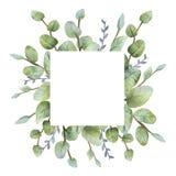 Grönt eukalyptuskort för akvarell på vit bakgrund royaltyfri illustrationer