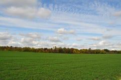 Grönt fält Royaltyfria Bilder