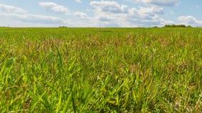 Grönt fält stock video