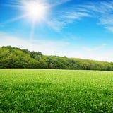 grönt fält Fotografering för Bildbyråer