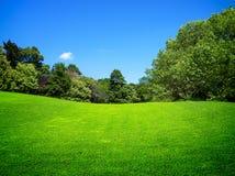 Grönt fält arkivbild