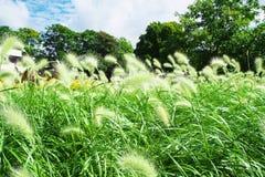 Grönt fält Royaltyfria Foton