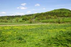 Grönt fält Arkivfoton