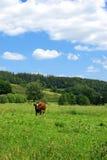 Grönt fält Royaltyfri Fotografi