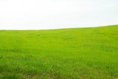 Grönt fält av gräs i Italien Royaltyfria Bilder