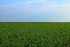 Grönt fält av vinterkorn som fortsätter till blå himmel för horisont Arkivbilder