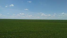 Grönt fält/blå himmel Arkivfoton