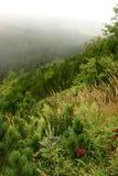 Grönt fält i bergen Arkivbild