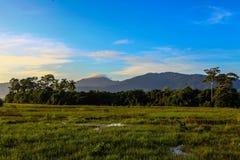 Grönt fält i morgonen Royaltyfri Foto