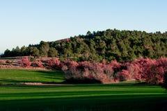 Grönt fält i Provence, Frankrike Arkivbilder