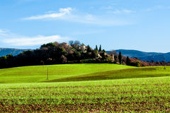 Grönt fält i Provence, Frankrike Arkivfoton