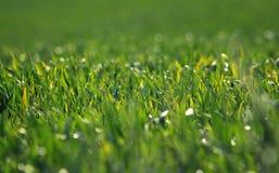 Grönt fält i vårsäsong arkivbilder