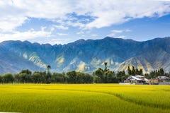 Grönt fält med bergbakgrund Royaltyfri Bild