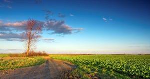 Grönt fält med blå himmel royaltyfri foto