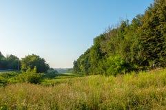 Grönt fält med blommande gräs Arkivbild