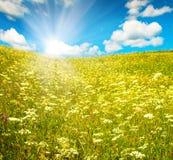 Grönt fält med blommas blommor och den blåa skyen Royaltyfri Foto