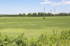 Grönt fält med en kraftledning Royaltyfria Foton