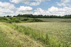 Grönt fält med gräs och blommor, låga buskar, skog på horisonten, blå himmel med stackmolnmoln, naturbakgrund arkivbilder