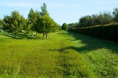 Grönt fält med häcken i florida Arkivbilder
