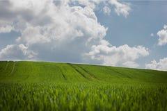 Grönt fält med himmel Royaltyfri Foto